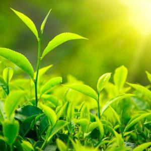 Биостимуляторы роста